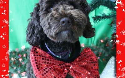 Save the Date: Pet Christmas Photos on 8 December!