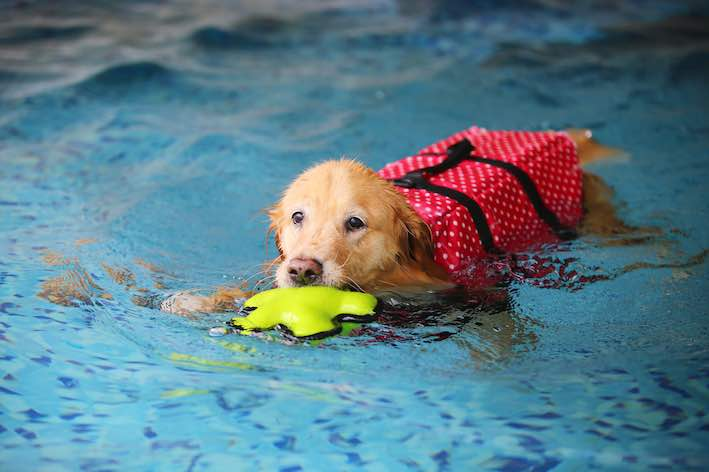 Not all Dogs Can Swim