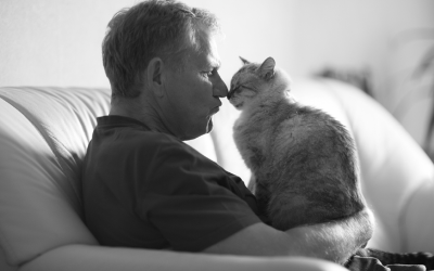 Your Aging Cat: Helping Senior Cats Thrive